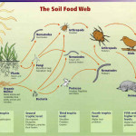 The soil food web. (http://www.nrcs.usda.gov/Internet/FSE_MEDIA/nrcs141p2_016927.jpg)