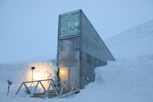 """The Svalbard Global Seed Vault, 800 miles from the North Pole, provides a safety net against """"accidental loss"""" of diversity in traditional genebanks."""